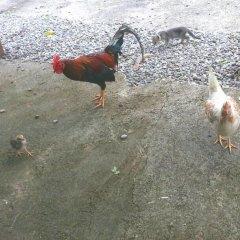 Отель Shiloh Ямайка, Каслтон - отзывы, цены и фото номеров - забронировать отель Shiloh онлайн с домашними животными