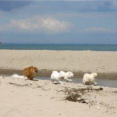 Отель Paradise Bungalows Варна пляж фото 2