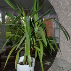 Гостиница Роза Ветров фото 12