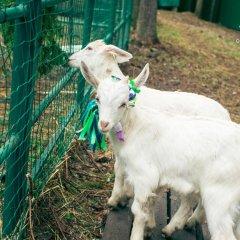 Гостиница Country Club Edem с домашними животными