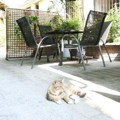 Chengdu Traffic Youth Hostel с домашними животными
