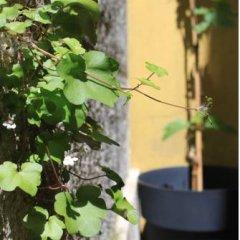 Grapes & Bites - Hostel And Wines Люкс