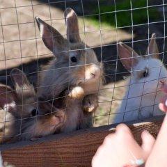Hotel Berghof с домашними животными