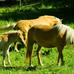 Hotel Alpenhof Стельвио с домашними животными