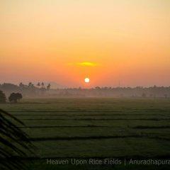 Отель Heaven Upon Rice Fields Шри-Ланка, Анурадхапура - отзывы, цены и фото номеров - забронировать отель Heaven Upon Rice Fields онлайн приотельная территория