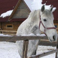 Гостиница Воеводино Курорт с домашними животными