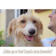 Отель Apartamentos Campana Эль-Грове с домашними животными