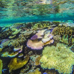 Отель Matangi Private Island Resort пляж фото 2