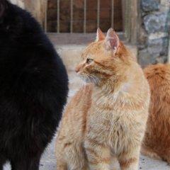 L'isola Guesthouse Турция, Хейбелиада - отзывы, цены и фото номеров - забронировать отель L'isola Guesthouse - Adults Only онлайн с домашними животными