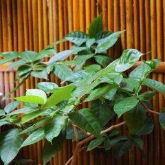 Отель Under the coconut tree Бунгало с различными типами кроватей фото 15