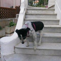 Отель Villa Saphir Ницца с домашними животными