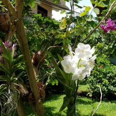 Апартаменты Coral Palm Villa and Apartment фото 7