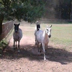 Отель A Lagosta Perdida с домашними животными