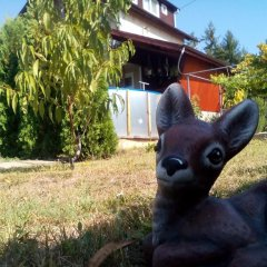 Отель Villa Reveri с домашними животными