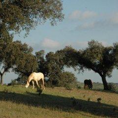 Отель Herdade do Monte Outeiro - Turismo Rural с домашними животными