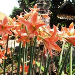 Отель Areeya Phuree Resort фото 8
