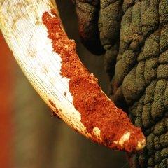 Отель Gorah Elephant Camp Южная Африка, Аддо - отзывы, цены и фото номеров - забронировать отель Gorah Elephant Camp онлайн спа фото 2