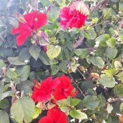 Отель Villa Doris Кипр, Протарас - отзывы, цены и фото номеров - забронировать отель Villa Doris онлайн фото 2
