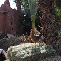 Отель Ecolodge - La Palmeraie Марокко, Уарзазат - отзывы, цены и фото номеров - забронировать отель Ecolodge - La Palmeraie онлайн бассейн