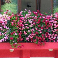 Family Hotel Flora Ардино интерьер отеля фото 3