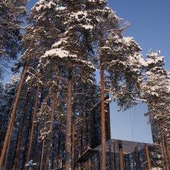 Tree Hotel фото 10