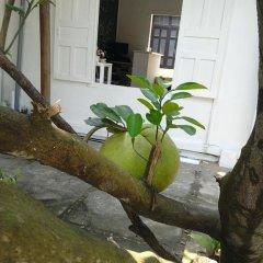 Отель Gia Bao Phat Homestay фото 11