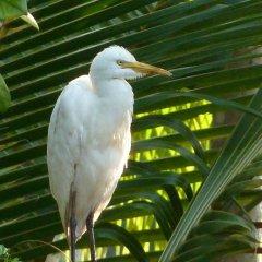 Отель Villa La Luna Шри-Ланка, Берувела - отзывы, цены и фото номеров - забронировать отель Villa La Luna онлайн с домашними животными
