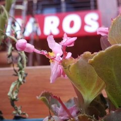 Haros Apart Hotel Турция, Узунгёль - отзывы, цены и фото номеров - забронировать отель Haros Apart Hotel онлайн помещение для мероприятий