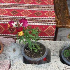 Отель Three Jugs B&B Армения, Ереван - 1 отзыв об отеле, цены и фото номеров - забронировать отель Three Jugs B&B онлайн фото 12