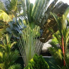 Апартаменты Coral Palm Villa and Apartment фото 3