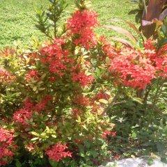 Отель Villa Paola Jamaica фото 7