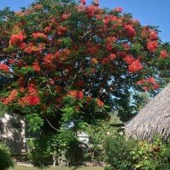Отель Hibiscus Французская Полинезия, Муреа - отзывы, цены и фото номеров - забронировать отель Hibiscus онлайн фото 4
