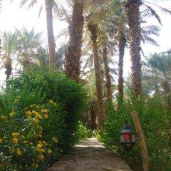 Отель Riad Tagmadart Ferme D'hôte Марокко, Загора - отзывы, цены и фото номеров - забронировать отель Riad Tagmadart Ferme D'hôte онлайн пляж фото 2