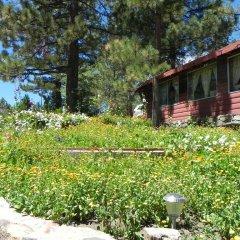 Oak Knoll Lodge And Cabins Big Bear Lake United States Of America