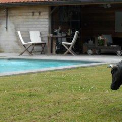 Отель Flemish cottage Бельгия, Осткамп - отзывы, цены и фото номеров - забронировать отель Flemish cottage онлайн бассейн