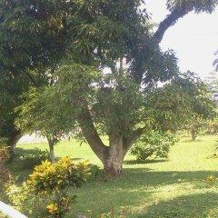 Отель Villa Paola Jamaica фото 6