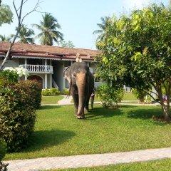 Отель Bougain Villa Шри-Ланка, Берувела - отзывы, цены и фото номеров - забронировать отель Bougain Villa онлайн с домашними животными
