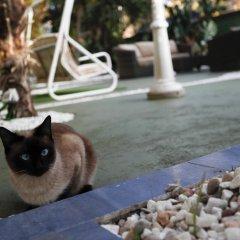 Отель Escala Suites с домашними животными