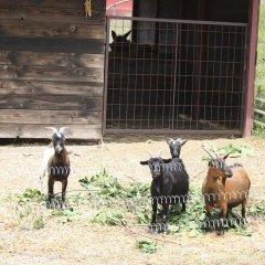 Отель Mas Tarres с домашними животными