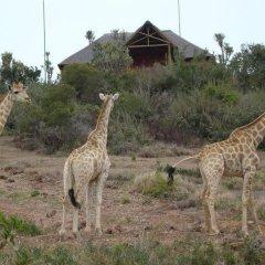 Отель Addo Afrique Estate фото 5