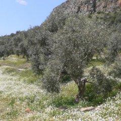 Отель Natureland Efes