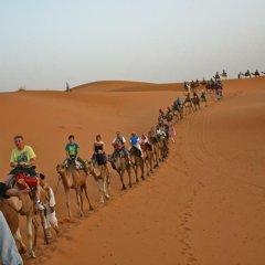 Отель Moda Camp Марокко, Мерзуга - отзывы, цены и фото номеров - забронировать отель Moda Camp онлайн помещение для мероприятий фото 2