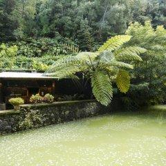 Отель Quinta da Mó Фурнаш бассейн фото 3