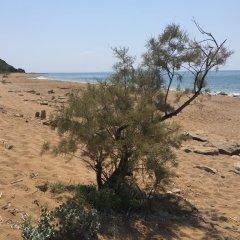 Отель Olive Grove Resort пляж