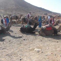 Отель Bivouac Draa Марокко, Загора - отзывы, цены и фото номеров - забронировать отель Bivouac Draa онлайн с домашними животными