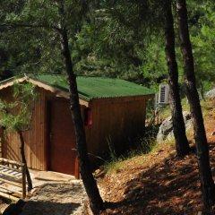 Tree Houses 3* Бунгало с различными типами кроватей фото 3