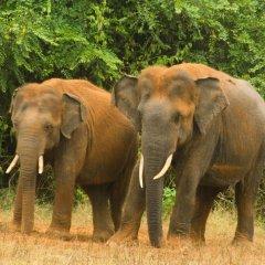 Отель Big Game Camp Yala Шри-Ланка, Катарагама - отзывы, цены и фото номеров - забронировать отель Big Game Camp Yala онлайн фото 16