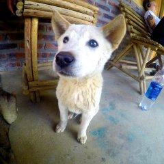 Отель Hoang Kim Homestay Шапа с домашними животными