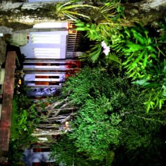 Отель Milk Fruit Homestay фото 5