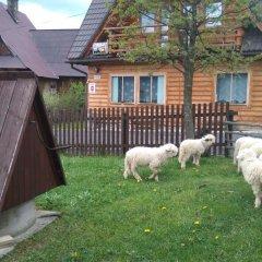 Отель Pokoje u Sarnowskich Косцелиско с домашними животными
